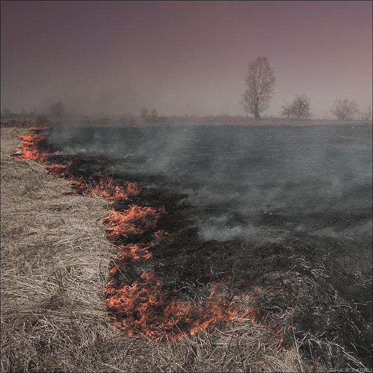 F.I.R.E. - огонь весна трава деревня квадратное фото фотосайт