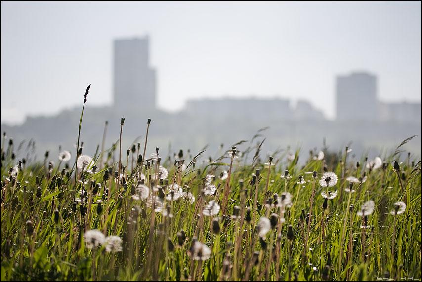 Тень природы - город одуванчики лето зелень тень силует фото фотосайт