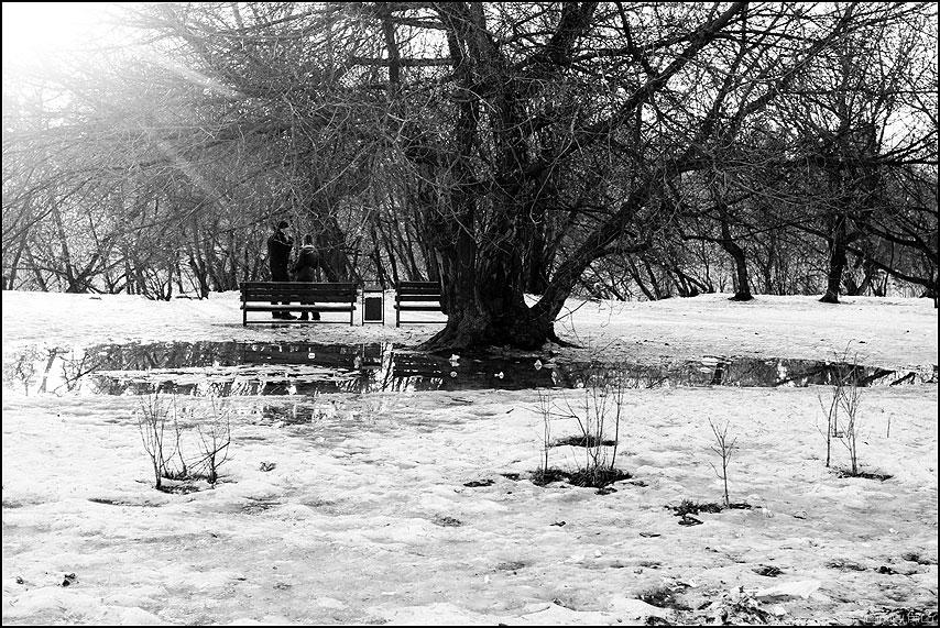 Под столетним дубом - парочка весна снег кусты проталины монохром фото фотосайт