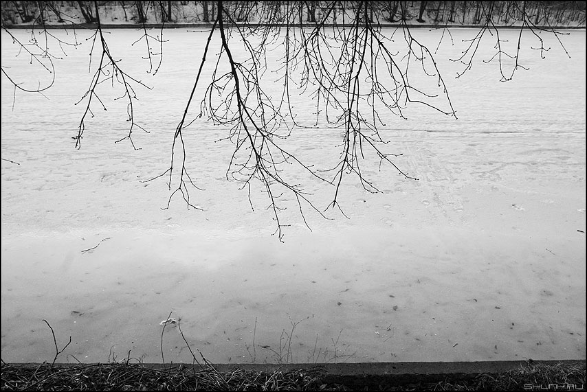Почки набухают - почки ветки канал река москва весеннее весна берег монохром фото фотосайт