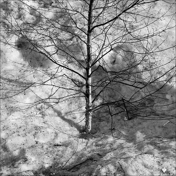 Во поле березка стояла - березка квадратное монохром снег весна фото фотосайт