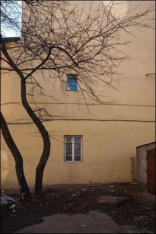 Про синее окно... - дерево окна стена элементы двор ветви весеннее фото фотосайт