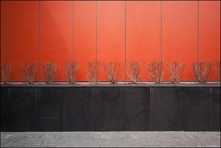 Этюд - оранжевое кустики черное весеннее фото фотосайт