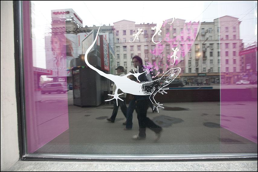 Ящерка - отражение я ящерка уличное витрина фото фотосайт