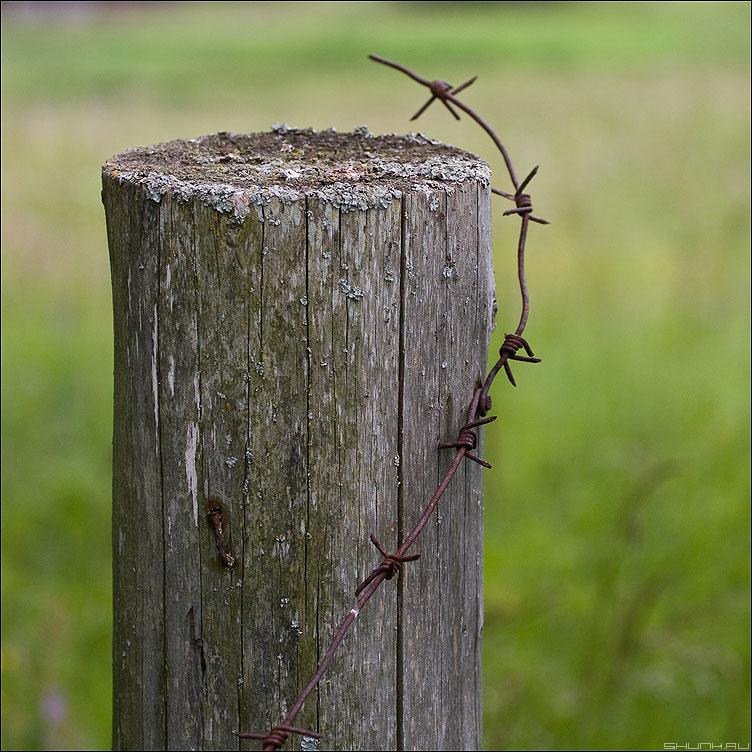 Узелки - калючка узелки столб деревня квадратное фото фотосайт