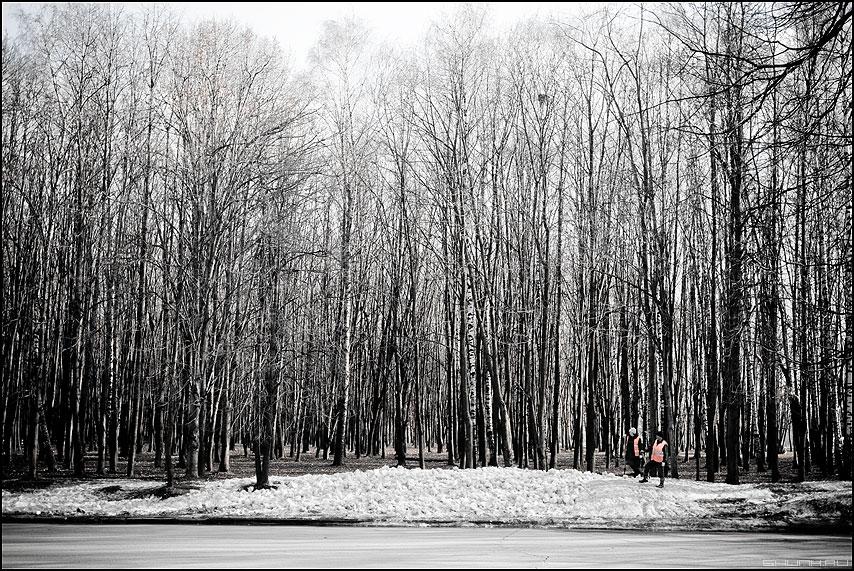 ЛЕС - снег деревья весна дворники поклонка фото фотосайт