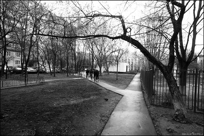 * * * - монохром деревья тропинка дворы уличное фото фотосайт