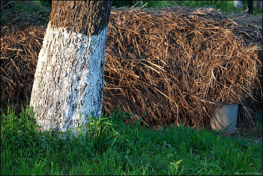 Затаилося ведро - ведро яблоня белое навоз куча деревня фото фотосайт