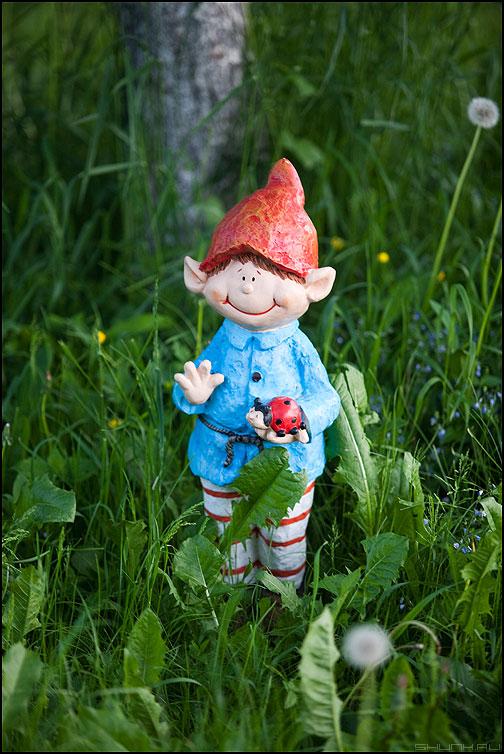 Вам привет от Васи! - вася деревня трава одуванчики лето тепло фото фотосайт