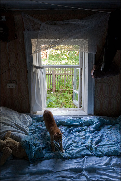Доброе утро! - кот окно деревня лето солнечное постель изба фото фотосайт