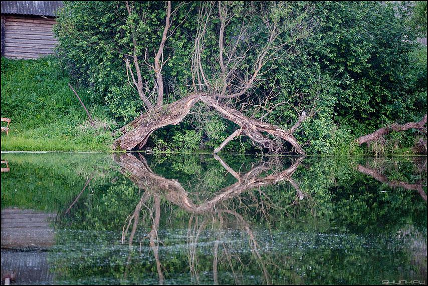 Коряго - пруд отражение коряга ветви деревня лето фото фотосайт