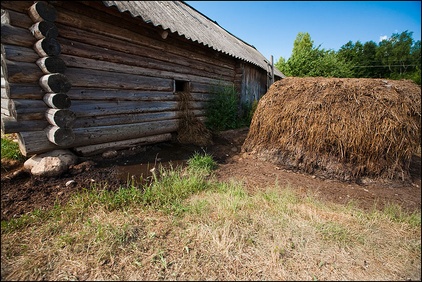 Хорошо в деревне летом - пахнет сеном и .... - деревня сарай навоз жижа солома коровник фото фотосайт