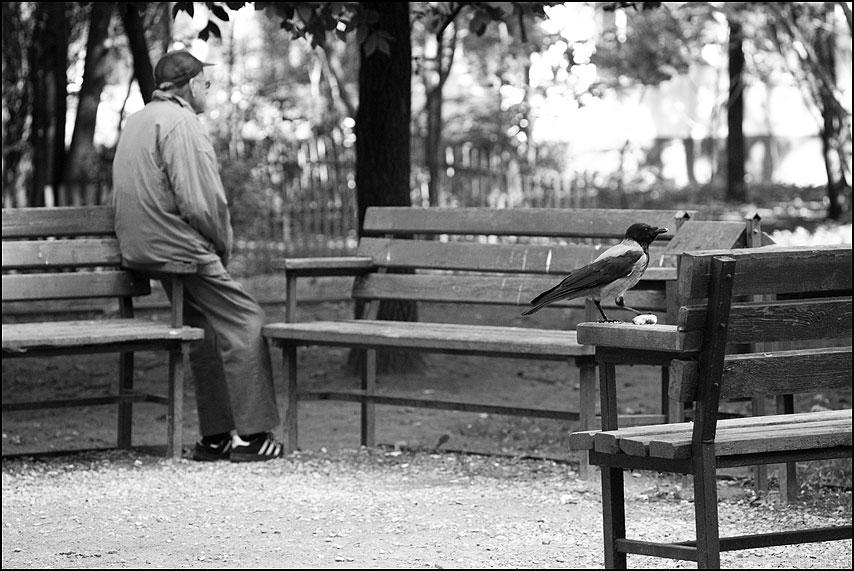 * * * - мужик лавочки монохромное ворона двор фото фотосайт