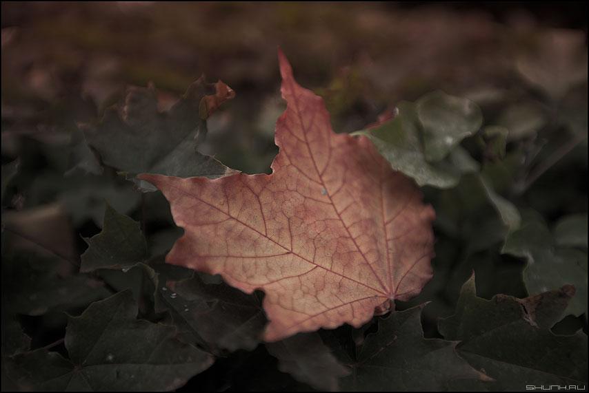 Лист осенний золотист... - лист падший осеннее осень элементик фото фотосайт
