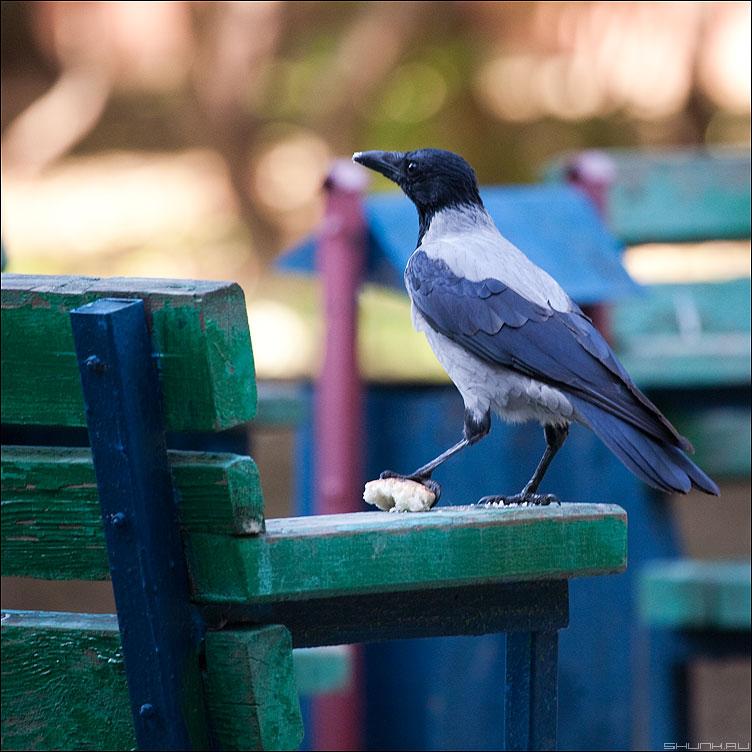 За обедом - ворона квадратное хлеб фото фотосайт