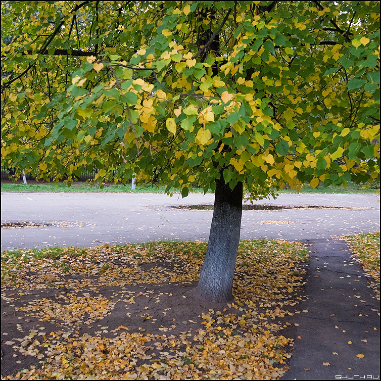 О.С.Е.Н.Ь - осень дерево тропинка фото фотосайт