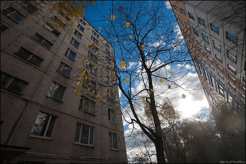 Зажатая осень - осень дерево небо дома листья клен 2010 фото фотосайт