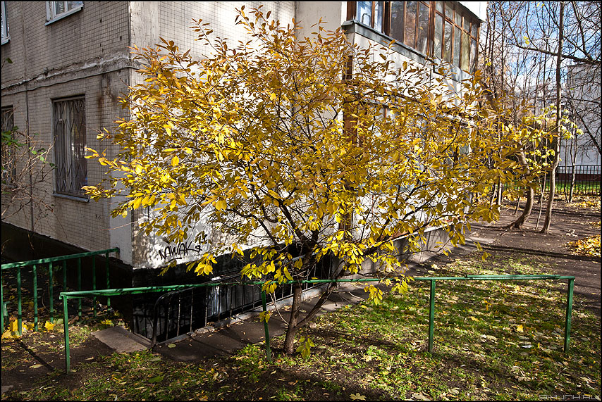 Куст у дома - осень желтое листья куст листва 2010 фото фотосайт