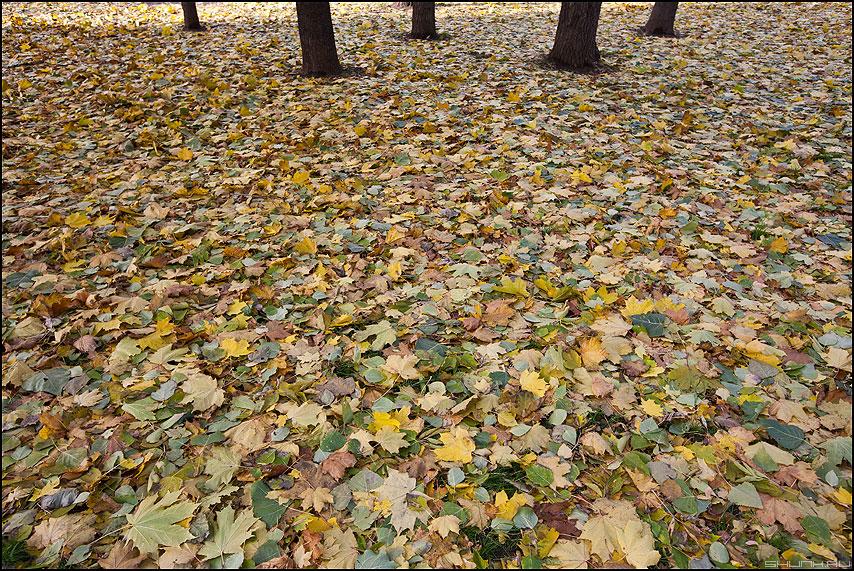 Осень на пяти столбах - осень ковер листва 2010 деревья листики фото фотосайт