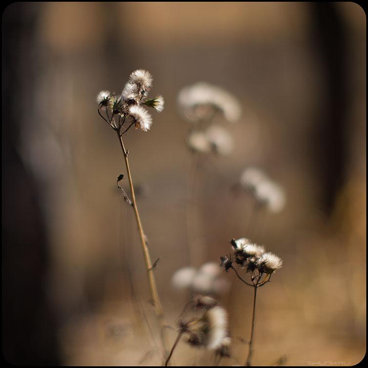 * * * - осень травинки веточи тычинки пестики фото фотосайт