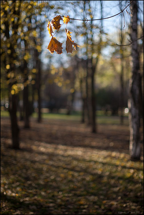 Листики на дырке 1.4 - парк лес листики осеннее деревья фото фотосайт