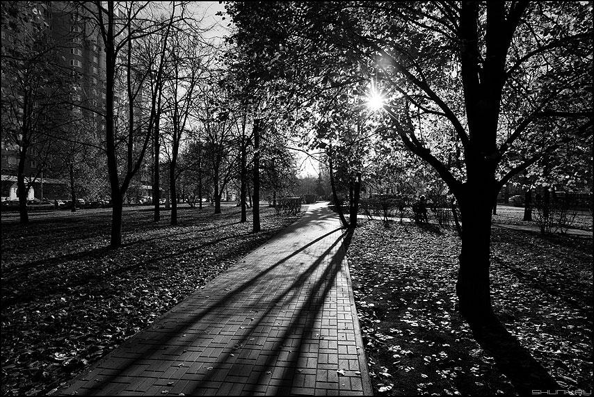 Редкое осеннее солнышко - осень полоски тени деревья парк монохромное фото фотосайт