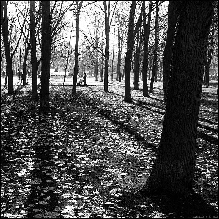 В осеннем парке городском... - монохром чб квадратное уличное осень коляска фото фотосайт