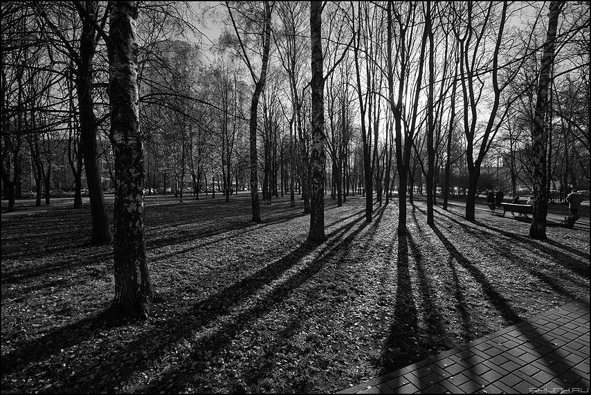Осенние полоски 3 - осень полоски тени деревья парк монохромное фото фотосайт