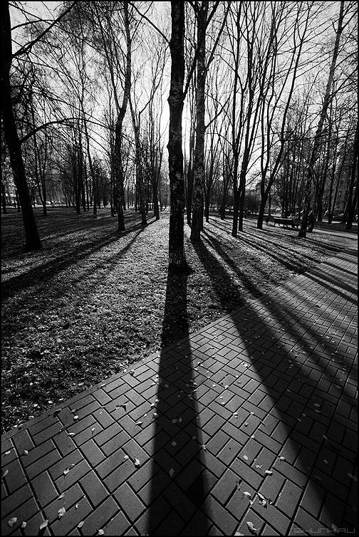 Осенние полоски 2 - осень полоски тени деревья парк монохромное фото фотосайт