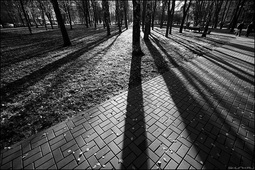 Осенние полоски 1 - осень полоски тени деревья парк монохромное фото фотосайт