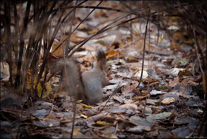 ...и орешки все грызет. - белочка белка листья осень краски осеннее фото фотосайт