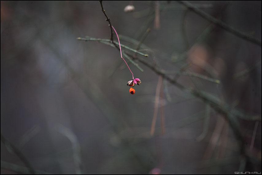 Ягодка - ягодка веточка осень осеннее элементы фото фотосайт