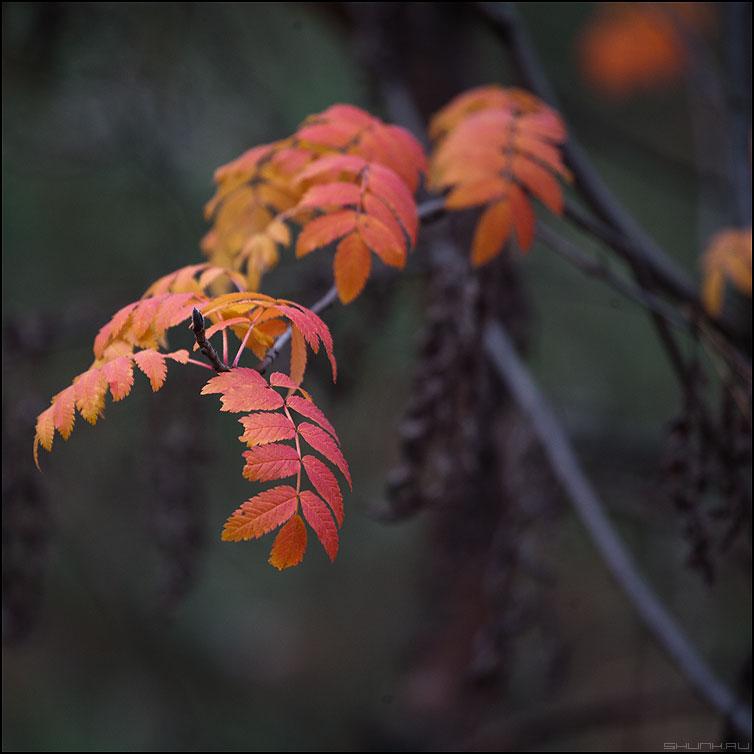 * * * - листочки веточки квадрат осень природа фото фотосайт