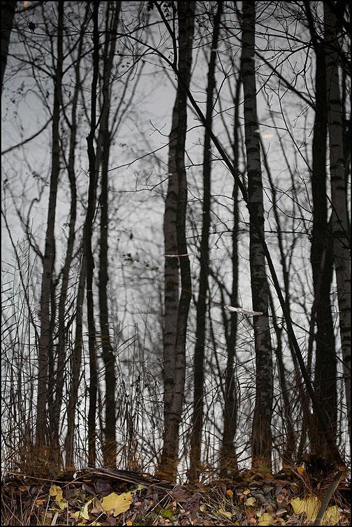 * * * - осень отражение деревья линии фото фотосайт