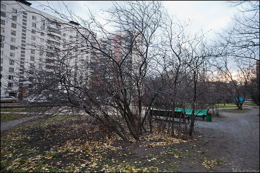 Осень в городе - город осень деревья голое фото фотосайт