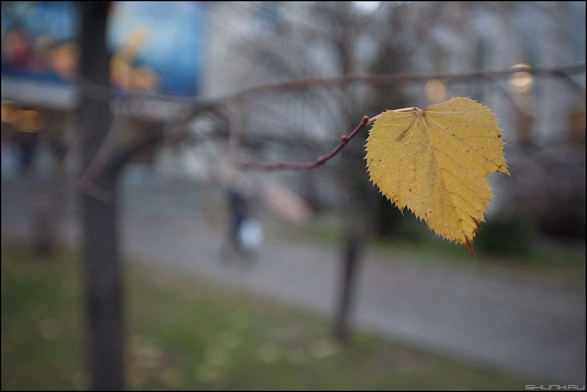 С ветки падающий лист... - лист ветка осень уличное последний фото фотосайт