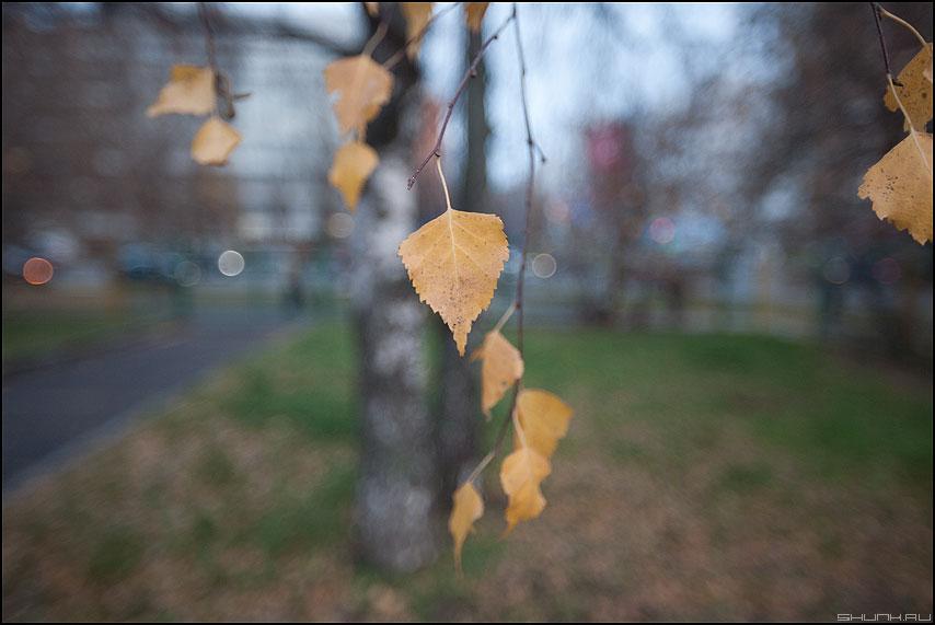 Листики - листья осень береза веточки осеннее уличное фото фотосайт