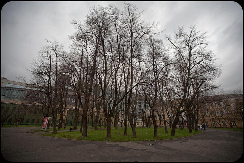 Осенний остров - остров музей деревья осеннее небо фото фотосайт