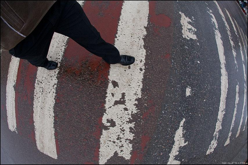 Шар земной - зебра полоски переход ноги фишай рыбийглаз фото фотосайт