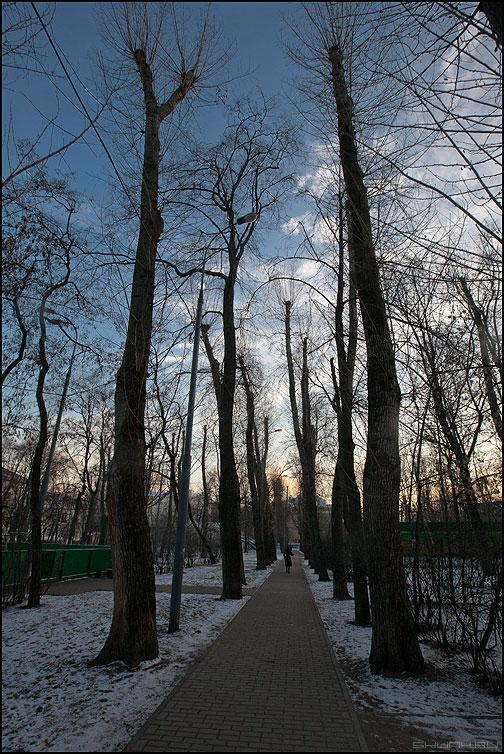 Когда деревья были большими - деревья небо тропинка девушка парк уличное фото фотосайт