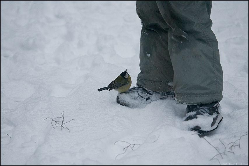 Голод не тетка! - синичка нога зима голод фото фотосайт