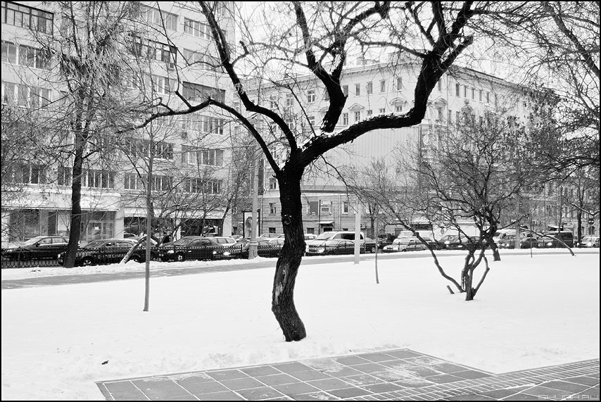 Дерево ЧБ - дерево зима монохромное фото фотосайт