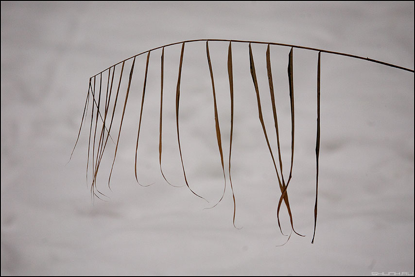 Грива - травинка снег зима элементик фото фотосайт