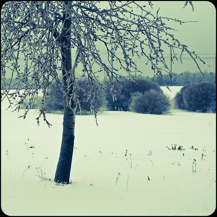 * * * - веточки квадратное обработка зима ледяное хрустальное дерево фото фотосайт