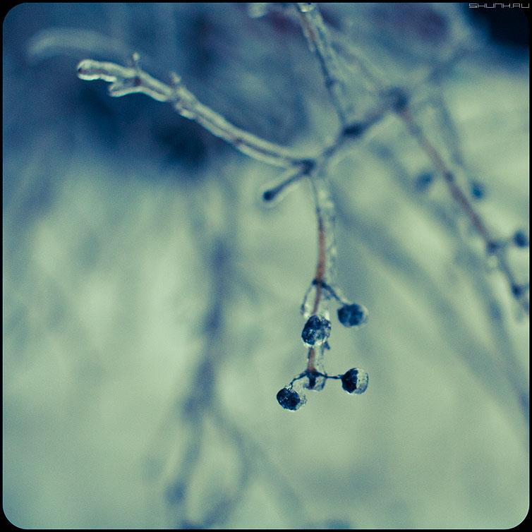 * * * - веточки квадратное обработка зима ледяное хрустальное ягодки фото фотосайт