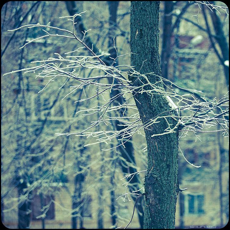 * * * - веточки квадратное обработка зима ледяное хрустальное  деревья уличное фото фотосайт