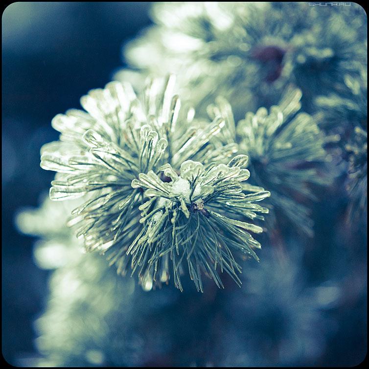 * * * - веточки квадратное обработка зима ледяное хрустальное иголочки елка наморозь фото фотосайт