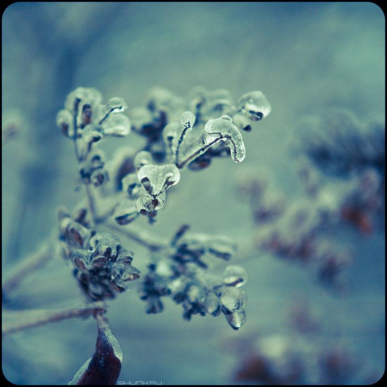 * * * - веточки квадратное обработка зима ледяное хрустальное  веточки фото фотосайт