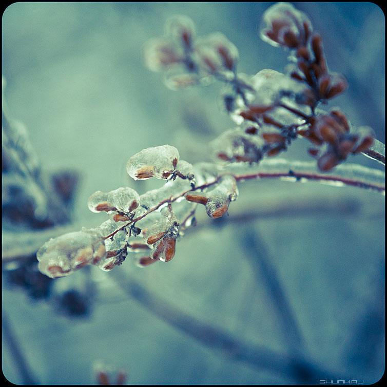 * * * - веточки квадратное обработка зима ледяное хрустальное красноватое фото фотосайт