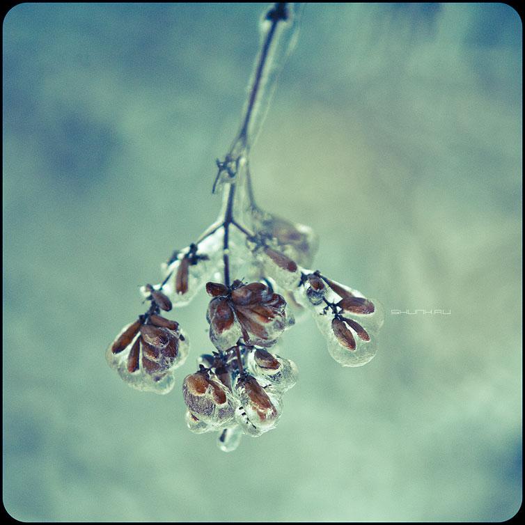 * * * - веточки квадратное обработка зима ледяное хрустальное  веточка сверху фото фотосайт